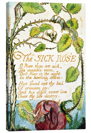 Leinwandbild  Die kranke Rose - William Blake