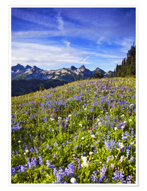 Premium-Poster Blumenwiese am Mount Rainier