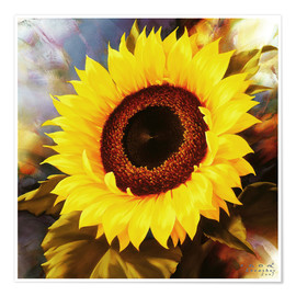 Premium-Poster sunflower