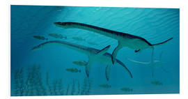 Hartschaumbild  Three Plesiosaurus dinosaurs migrate with a school of fish. - Corey Ford