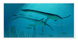 Premium-Poster Three Plesiosaurus dinosaurs migrate with a school of fish.