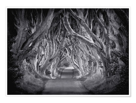 Premium-Poster The Dark Hedges