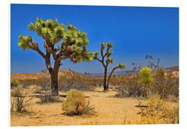 Forex  Joshua Tree - fotoping