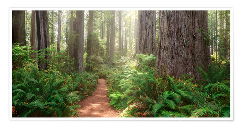 Premium-Poster Redwoods Magic