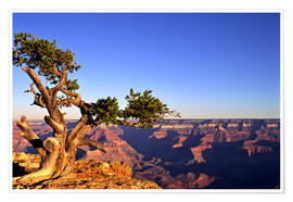 Premium-Poster Grand Canyon in Arizona