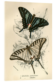 Acrylglasbild  Butterflies - English School
