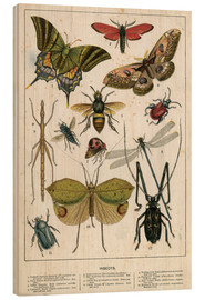 Holzbild  Insects - English School