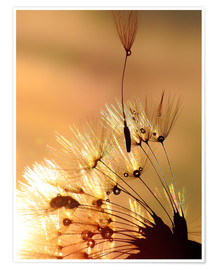 Poster Pusteblume golden Touch