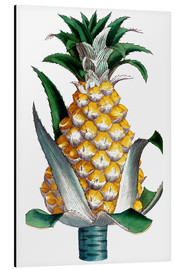 Alubild  Pineapple, 1789.