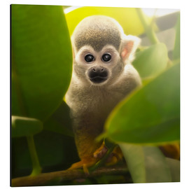 Photoplace Creative - Baby Affe