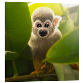 Forex  Baby Affe - Photoplace Creative