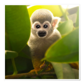 Poster  Baby Affe - Photoplace Creative