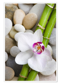 Poster  Bambus und Orchidee - Andrea Haase Foto