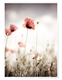 Poster Roter Mohn