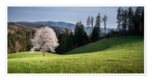 Poster Blooming Apple Tree in Black Forest