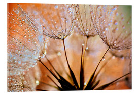 Acrylglasbild  Pusteblume orange Light - Julia Delgado