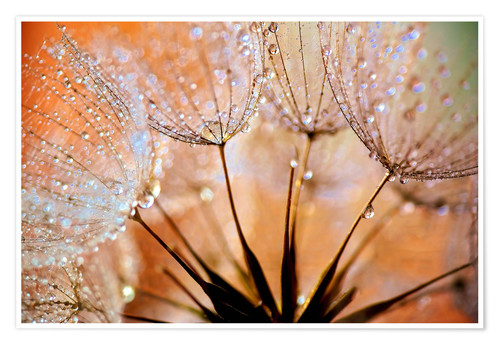 Premium-Poster Pusteblume orange Light