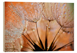 Holzbild  Pusteblume orange Light - Julia Delgado