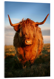 Acrylglas  Highlander - Hochland Rind - Highland Cattle - Martina Cross