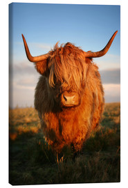 Leinwandbild  Highlander - Hochland Rind - Highland Cattle - Martina Cross