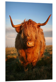 Hartschaumbild  Highlander - Hochland Rind - Highland Cattle - Martina Cross