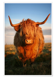 Premium-Poster  Highlander - Hochland Rind - Highland Cattle - Martina Cross