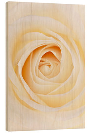 Holzbild  Rose - GAVIN KINGCOME