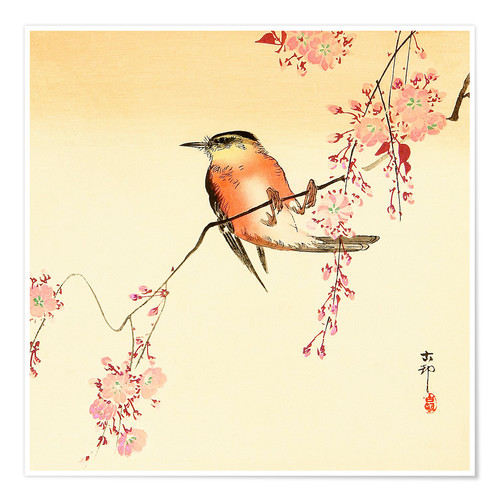 Póster Red Bird and Cherry Blossoms