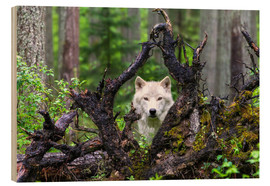 Holzbild  Wolf - Mike Centioli