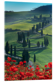 Acrylglasbild  Winding road and poppies, Montichiello, Tuscany, Italy, Europe - Angelo Cavalli