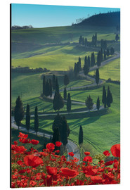 Alubild  Winding road and poppies, Montichiello, Tuscany, Italy, Europe - Angelo Cavalli