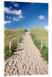 Acrylglasbild  Path through dunes, Sylt, North Frisian Islands,Nordfriesland, Schleswig Holstein, Germany - Markus Lange