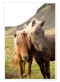 Premium-Poster Horses, South Iceland, Northern Europe