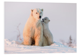 Forex  Polar bear (Ursus maritimus) and cub, Wapusk National Park, Churchill, Hudson Bay, Manitoba, Canada, - David Jenkins