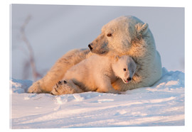 Acrylglas  Polar bear (Ursus maritimus) and cub, Wapusk National Park, Churchill, Hudson Bay, Manitoba, Canada, - David Jenkins
