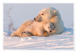 Poster  Polar bear (Ursus maritimus) and cub, Wapusk National Park, Churchill, Hudson Bay, Manitoba, Canada, - David Jenkins