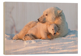 Holzbild  Polar bear (Ursus maritimus) and cub, Wapusk National Park, Churchill, Hudson Bay, Manitoba, Canada, - David Jenkins