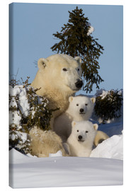 Leinwandbild  Polar bear (Ursus maritimus) and cubs, Wapusk National Park, Churchill, Hudson Bay, Manitoba, Canada - David Jenkins