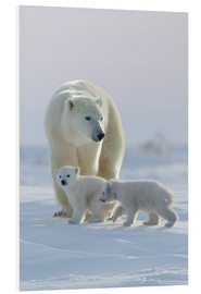 Forex  Polar bear (Ursus maritimus) and cubs, Wapusk National Park, Churchill, Hudson Bay, Manitoba, Canada - David Jenkins