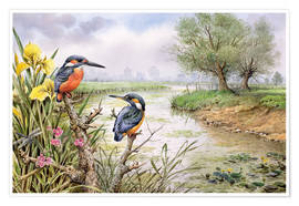 Poster  Kingfishers on the Riverbank - Carl Donner