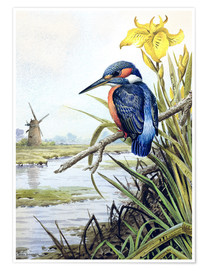 Poster  Kingfisher with Flag Iris and Windmill - Carl Donner