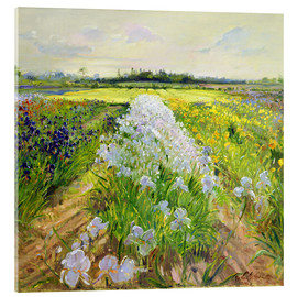 Acrylglasbild  Blumenfeld - Timothy Easton