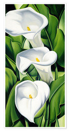 Premium-Poster  Lilien - Catherine Abel