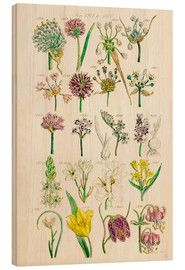 Obraz na drewnie  Wildflowers - Sowerby Collection