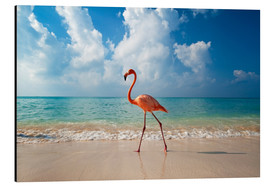 Alu-Dibond  Flamingo am Strand - Ian Cuming