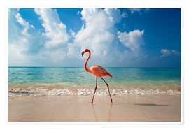 Premium-Poster  Flamingo am Strand - Ian Cuming