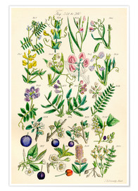 Poster  Wildblumen - Ken Welsh
