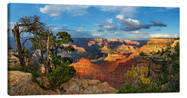 Leinwandbild  Grand Canyon mit knorriger Kiefer - Michael Rucker