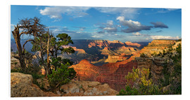Hartschaumbild  Grand Canyon mit knorriger Kiefer - Michael Rucker