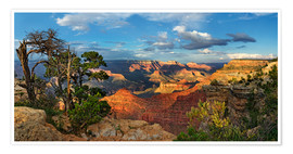 Premium-Poster Grand Canyon mit knorriger Kiefer
